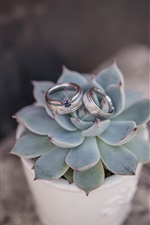 Preview iPhone wallpaper Succulent plant, wedding rings