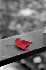 Preview iPhone wallpaper Swing, red maple leaf, black white style