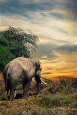 Preview iPhone wallpaper Thailand, elephant, grass, sunset