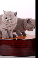 Preview iPhone wallpaper Three gray kittens play guitar