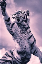 Preview iPhone wallpaper Tiger, paw, clouds, black and white picture