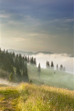 Trees, grass, hills, fog, morning