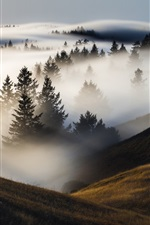 Preview iPhone wallpaper Trees, mountains, fog, morning
