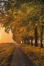 Árvores, estrada, campo, amanhecer, manhã