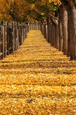 Preview iPhone wallpaper Trees, yellow leaves, path, fence, park, autumn