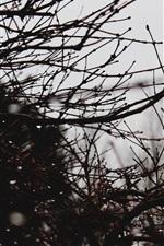 Twigs, water drops, dusk