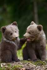 Preview iPhone wallpaper Two bear cubs playful