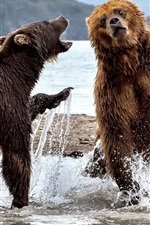 Preview iPhone wallpaper Two bears play in water