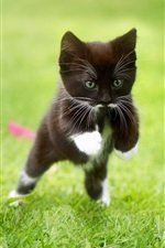 Preview iPhone wallpaper Two black kitten running in the grass