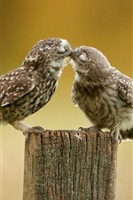 Preview iPhone wallpaper Two cute owls kiss