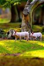 Preview iPhone wallpaper Two pigs walk in the grass