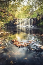 Waterfall, river, trees, forest, autumn