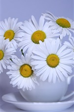 White chamomile flowers, cup