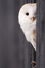 Preview iPhone wallpaper White owl look out