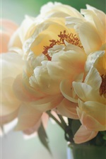 Preview iPhone wallpaper White peonies, petals, macro photography