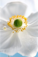 Preview iPhone wallpaper White petals flower, bokeh
