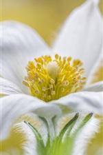 Vorschau des iPhone Hintergrundbilder Makrofotografie der weißen Blumenblattblume Makro, Stempel