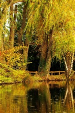 Preview iPhone wallpaper Willow, autumn, park, pond