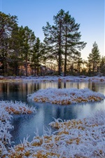 Preview iPhone wallpaper Winter, frozen, grass, trees, pond, Norway