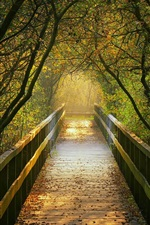 Preview iPhone wallpaper Wooden bridge, path, trees, autumn, Germany