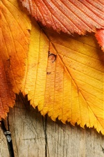 Preview iPhone wallpaper Yellow and red leaves, wood background, autumn