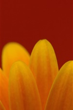 Yellow flower petals close-up, red background