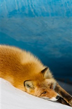 Preview iPhone wallpaper A fox sleep on snow
