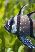 Preview iPhone wallpaper Algae and fish