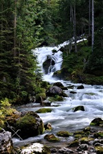 Preview iPhone wallpaper Austria, Hallstatt, coniferous, trees, forest, stream, stones