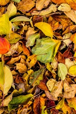 Preview iPhone wallpaper Autumn, dry leaves on ground