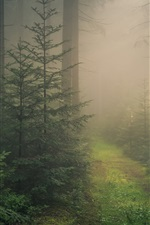 Preview iPhone wallpaper Baden-Wurttemberg, Black Forest, fog, Germany