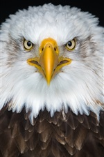 Preview iPhone wallpaper Bald eagle front view, beak, eyes