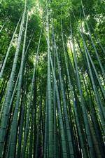 Vorschau des iPhone Hintergrundbilder Bambus, Stängel, Laub, Wald, grün