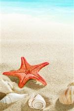Praia, concha, estrela do mar, mar