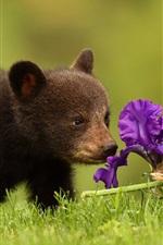 Bear cub and iris flower