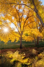 Preview iPhone wallpaper Beautiful autumn, trees, yellow leaves, sun rays