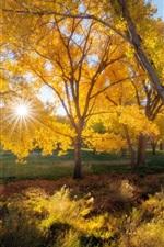 Belo outono, árvores, folhas amarelas, raios solares