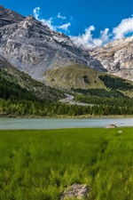 Preview iPhone wallpaper Bernese Alps, grass, lake, trees