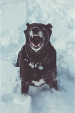 Preview iPhone wallpaper Black dog open mouth, winter, snow