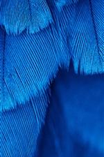 iPhone fondos de pantalla Textura de plumas azules