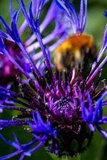 Preview iPhone wallpaper Blue flower close-up, petals, bokeh
