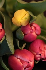 Preview iPhone wallpaper Bouquet, tulips, red and yellow