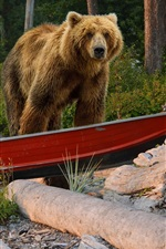 Preview iPhone wallpaper Brown bear in boat