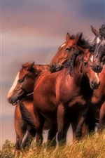 Preview iPhone wallpaper Brown color horses, grass, wind