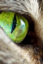 Preview iPhone wallpaper Cat green eyes close-up