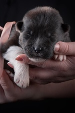 Preview iPhone wallpaper Cute puppy sleep in hands