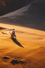 Preview iPhone wallpaper Desert, sand, dog running