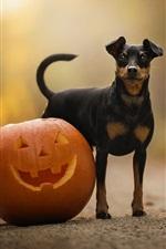 Preview iPhone wallpaper Dog and pumpkin, Halloween