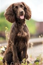 iPhone обои Собака, коричневый, железная дорога, трава