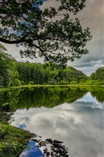 Preview iPhone wallpaper England, Cumbria, lake, tree, trees, beautiful summer